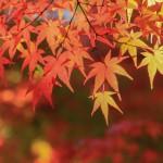 秋は変化の時期です