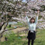 また桜。(笑)