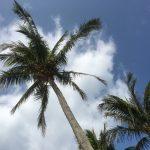 沖縄ブーム